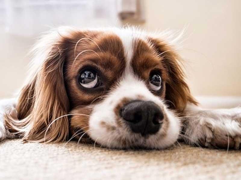 Giornata mondiale degli amanti dei cani 26 settembre